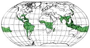 Area of distribution of bamboo